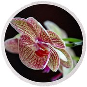 Study Of An Orchid 3 Round Beach Towel