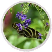 Stunning Black And White Zebra Butterfly In The Spring Round Beach Towel