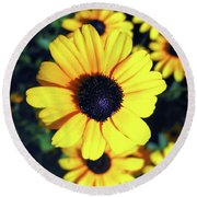 Stunning Black Eyed Susan  Round Beach Towel