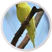 Stunning Little Yellow Budgie Parakeet In Nature Round Beach Towel