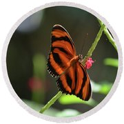 Stunning Oak Tiger Butterfly Resting On Flowers Round Beach Towel