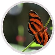 Stunning Orange And Black Oak Tiger Butterfly In Nature Round Beach Towel