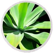 Succulent Agave Art By Sharon Cummings Round Beach Towel