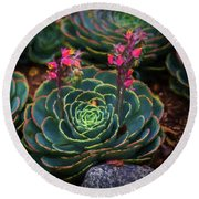 Succulent Flowers Round Beach Towel