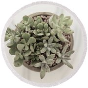 Succulent Plant From The Top Round Beach Towel