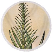 Sugar Cane, 1597 Round Beach Towel