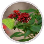 Sulphur Butterfly On Red Flower Round Beach Towel