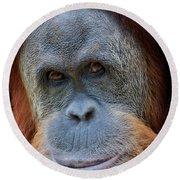 Sumatra Orangutan Portrait Round Beach Towel