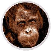 Sumatran Orangutan Female Round Beach Towel