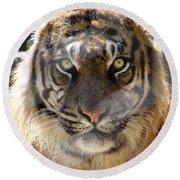Sumatran Tiger-1440 Round Beach Towel