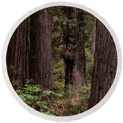 Summer In Redwood National Park Vertical Round Beach Towel