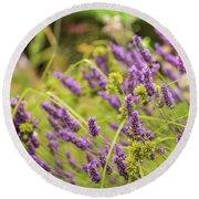 Summer Lavender In Lush Green Fields Round Beach Towel
