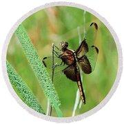 Summer Dragonfly Round Beach Towel