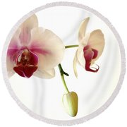 Summer Orchids Round Beach Towel