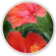 Summer Time Beauties - Hibiscus - Dora Sofia Caputo Round Beach Towel