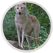 Summer Wolf Round Beach Towel