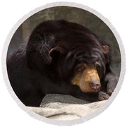 Sun Bear Round Beach Towel