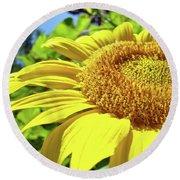 Sun Flower Art Sunlit Sunflower Giclee Prints Baslee Troutman Round Beach Towel