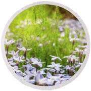 Sun-kissed Meadows With White Star Flowers Round Beach Towel