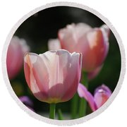 Sun Shining Through The Pink Petals Of A Tulip Round Beach Towel