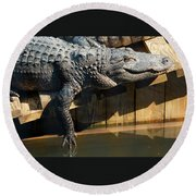 Sunbathing Gator Round Beach Towel
