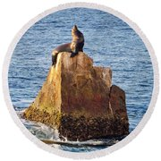 Sunbathing Sea Lion Round Beach Towel