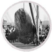 Sunfish Mola Mola On Monterey's Wharf Two June 20 1946 Round Beach Towel