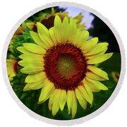 Sunflower After A Summer Rain Round Beach Towel