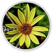 Sunflower Along Etiwanda Falls Trail In San Gabriel Mountains-california  Round Beach Towel