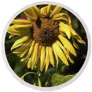 Sunflower Close Up Round Beach Towel