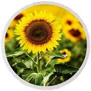 Sunflower Crops On A Farm In South Dakota Round Beach Towel