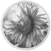 Sunflower Dawn Black And White Drawing Round Beach Towel