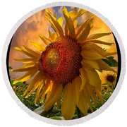 Sunflower Dawn In Oval Round Beach Towel