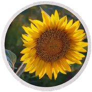 Sunflower - Facing East Round Beach Towel