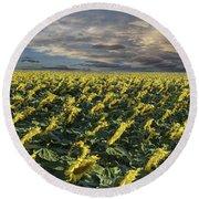 Sunflower Fields Near Denver International Airport Round Beach Towel