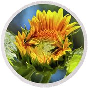 Sunflower Glory Round Beach Towel