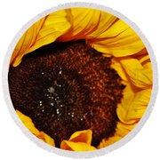 Sunflower In The Sun Round Beach Towel