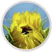 Sunflower Opening Sunny Summer Day 1 Giclee Art Prints Baslee Troutman Round Beach Towel