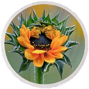 Sunflower Opens Round Beach Towel