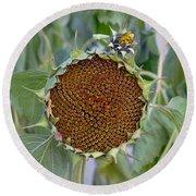 Sunflower Seedhead Round Beach Towel