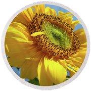Sunflower Sunlit Sun Flowers 6 Blue Sky Giclee Art Prints Baslee Troutman Round Beach Towel