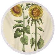 Sunflowers Illustration From Florilegium Round Beach Towel