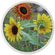 Sunflowers Of August Round Beach Towel