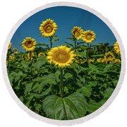 Sunflowers Weldon Spring Mo Ver1_dsc9821_16 Round Beach Towel