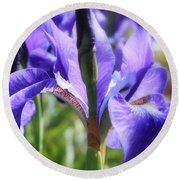Sunlight On Blue Irises Round Beach Towel by Carol Groenen
