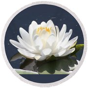 Sunlight On Water Lily Round Beach Towel