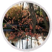 Sunlight Through Japanese Maple Round Beach Towel