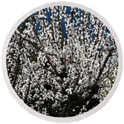 Sunlit Apricot Blossoms Round Beach Towel