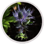 Sunlit Bloom Of Alpine Sea Holly Round Beach Towel