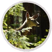 Sunlit Deer Friend Round Beach Towel